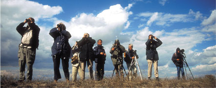 Danube Delta birdwatching group