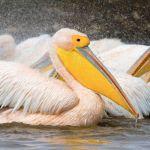 en Birds en de Vogelwelt de
