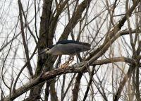 Danube Delta birds